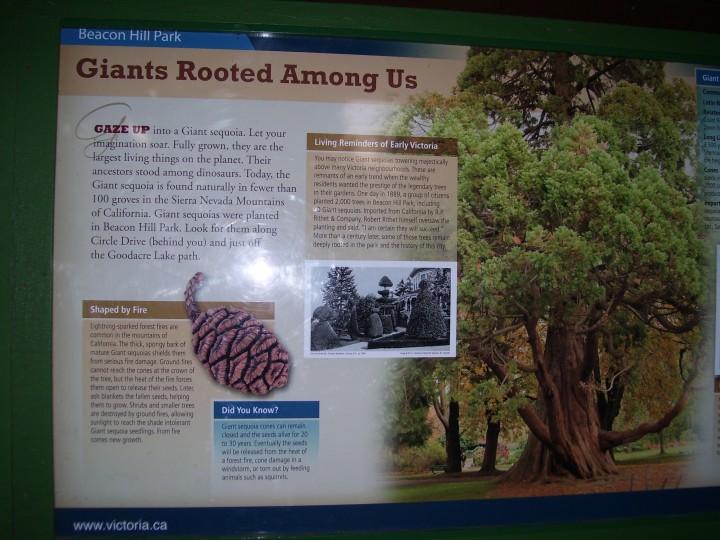 Sequoia Info