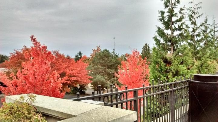 Uptown Leaves