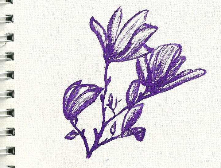 magnolias sketch