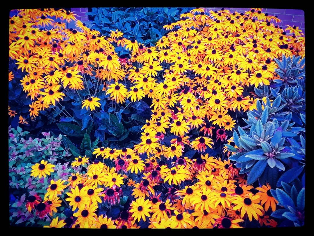 Flowers outside a mall