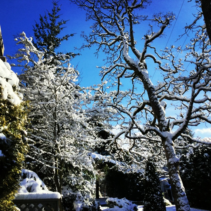 Snowy trees against a blue sky